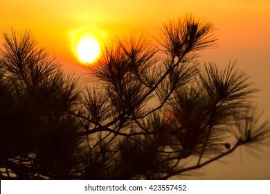 Sunrise in morning