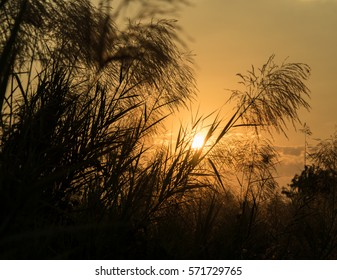 Sunrise in the morning, sunrise with feather grass.