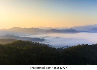 Sunrise in the morning fog. Tropical rainforest.