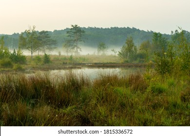 Sunrise at the National park Brunssumerheide (english Brunssumer heather) in het Netherlands, with a view on the swamp with early morning fog on the ground.