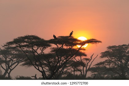 Sunrise in nDutu Forest Tanzania Africa