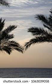 Sunrise near the sea, palm trees, Africa, Egypt
