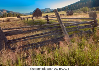 Sunrise at an old farmstead with old wooden fence and tall grasses in the foreground