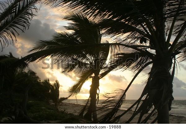 Sunrise on beach behind coconut palm trees