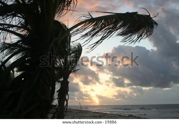 Sunrise on beach with palm tree