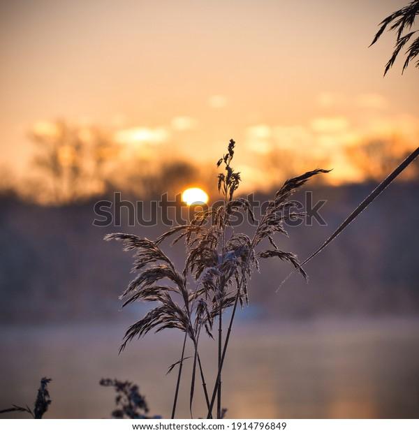 sunrise-on-cold-winter-morning-600w-1914