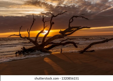 Sunrise on Driftwod Beach - Jekyll Island, Georgia