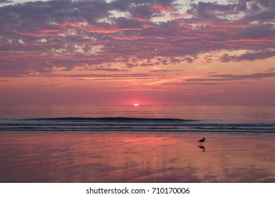 Sunrise on an East Coast Beach with Pink and Purple Clouds - Partly Cloudy Sky Waves Crashing - Seagull