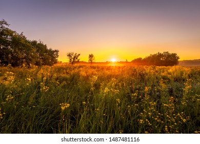Sunrise on a field covered with wild flowers in summer season with fog and trees on a background in morning. Landscape.