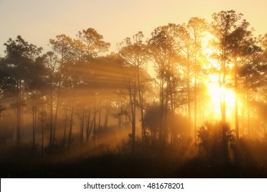 Sunrise on a foggy morning at Corkscrew Swamp Sanctuary in Florida