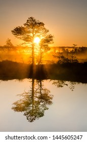 sunrise on the marsh landscape. the sun's rays penetrate through trees branches making light to golden