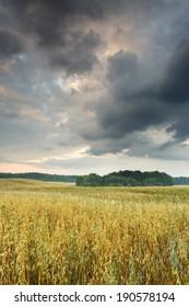 Sunrise on north Polands field.Pomerania district/Sunrise