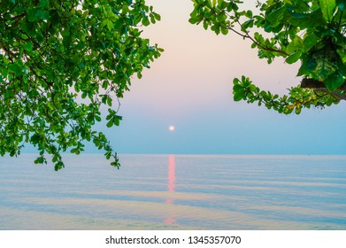 Sunrise on the ocean with green leaves