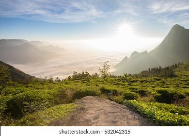 Sunrise on the Tea Plantations of Munnar in Kerala, India above cloud level
