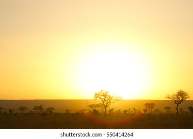 Sunrise over the African steppe