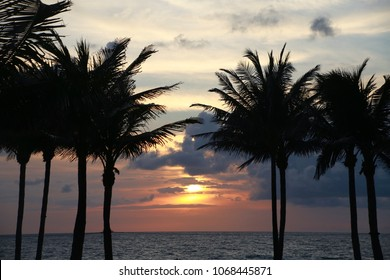 Sunrise Over the Atlantic Ocean Flanked by Palm Trees in Boca Raton, Florida