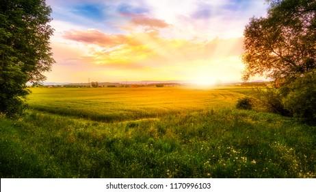 Sunrise over a cornfield