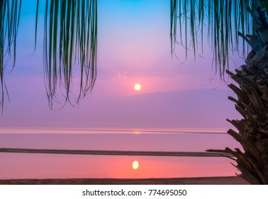 Sunrise over the Dead Sea with a palm tree. Israel