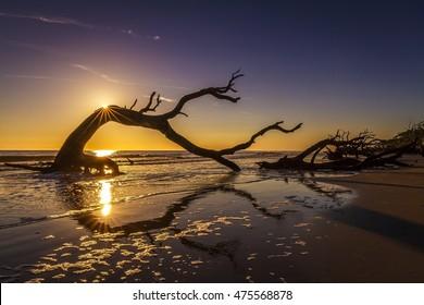Sunrise over a driftwood-covered beach -Jekyll Island, Georgia, United States