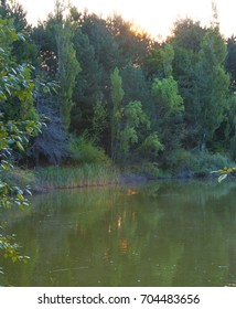 Sunrise over evergreen and deciduous trees surrounding a pond in summer.