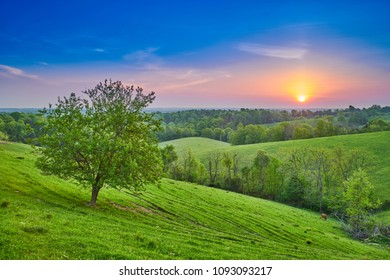 Sunrise Over Field with Tree