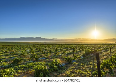 Sunrise over grape wineyards South Africa