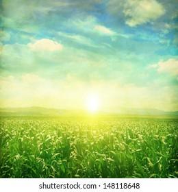 Sunrise over green corn field in grunge style.