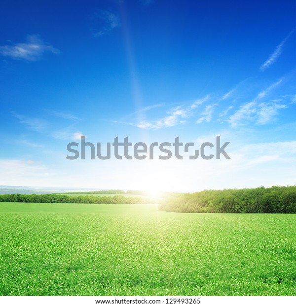 sunrise over a green field