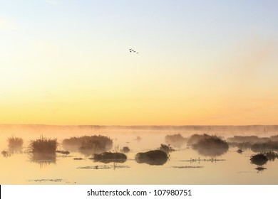 Sunrise over the lake with geese flying