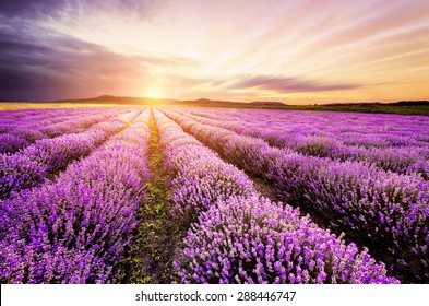 Sunrise over lavender field in Bulgaria