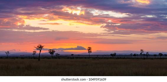 Sunrise over the Masai Mara, Kenya. Trees silhouetted against the hills of the Oldoinyio escarpment (also called Oloololo or Siria Escarpment), in the Mara Conservancy Triangle.