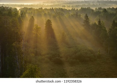 sunrise over masuria forrest with beams