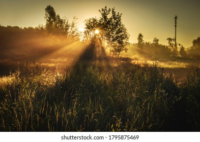 Sunrise over the meadow, foggy morning.