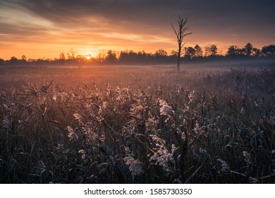 Sunrise over the meadow and lonely tree near Piaseczno, Masovia, Poland
