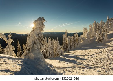 Sunrise over the mountains with firs full of snow in winter time. Poiana Brasov, Romania. Transylvania.