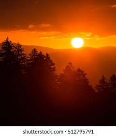 sunrise over the mountains/ trees in the foreground