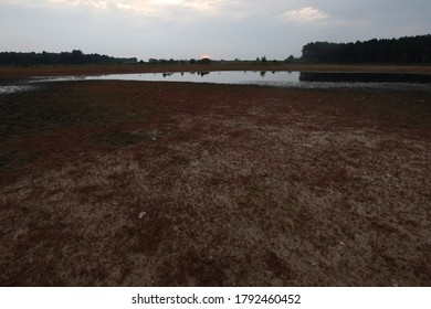 Sunrise over nearly dried-up peat pool in Dwingelderveld, the Netherlands