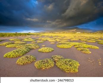 Sunrise over salt marsh estuary vegetation near Skala Kallonis on Lesbos island, Greece