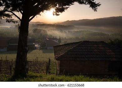 Sunrise over the vineyards in Piemonte, Italy.