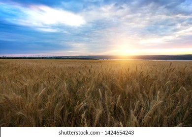 sunrise over the wheat field. beautiful countryside landscape.