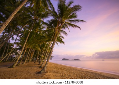 A sunrise a Palm Cove with palm trees in Cairns  tropical North Queensland in Australia