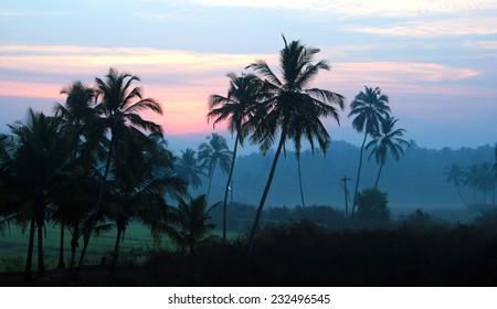 Sunrise in a palm grove, Goa, India