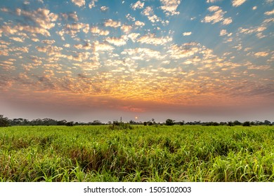 Sunrise in the Pampas Del Yacuma, Amazon, Bolivia