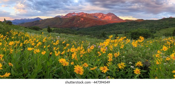 Sunrise panorama with wildflowers in the Wasatch Mountains, Utah, USA.