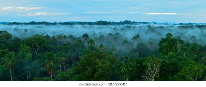 Sunrise in the rainforest. Amazon forest.