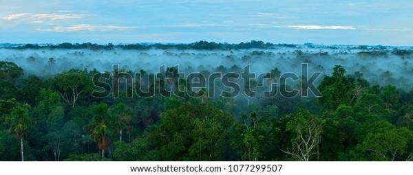 Lever du soleil dans la forêt tropicale. Forêt amazonienne.