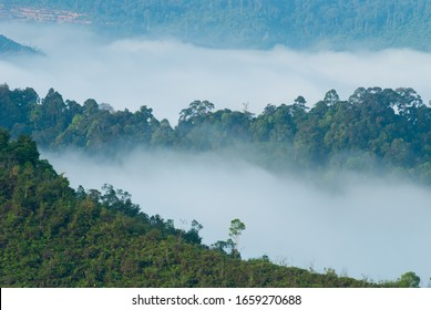 Sunrise of Rainforest, Sungai Lembing