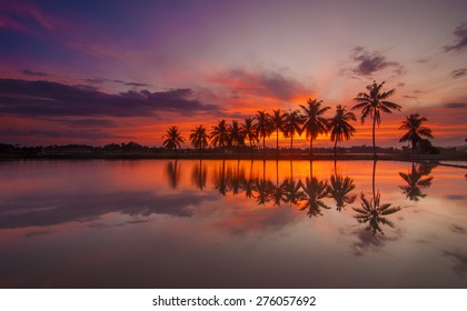 Sunrise with Reflection of tropical tree at Permatang Pauh Pulau Pinang