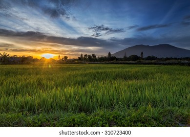Sunrise and Rice Fields at Koto Gadang, Bukittinggi, West Sumatera, Indonesia.
