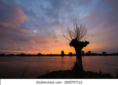 Sunrise at the river lek and this lonely pollard willow on the breakwater